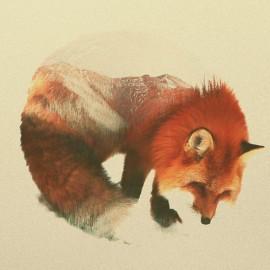 Gli animali di Andreas Lie