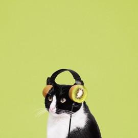 Le avventure digitali di Cheeto, la gattina più simpatica del web