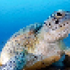 Queste immagini di animali in via d'estinzione contengono tanti pixel quanti sono gli esemplari rimasti