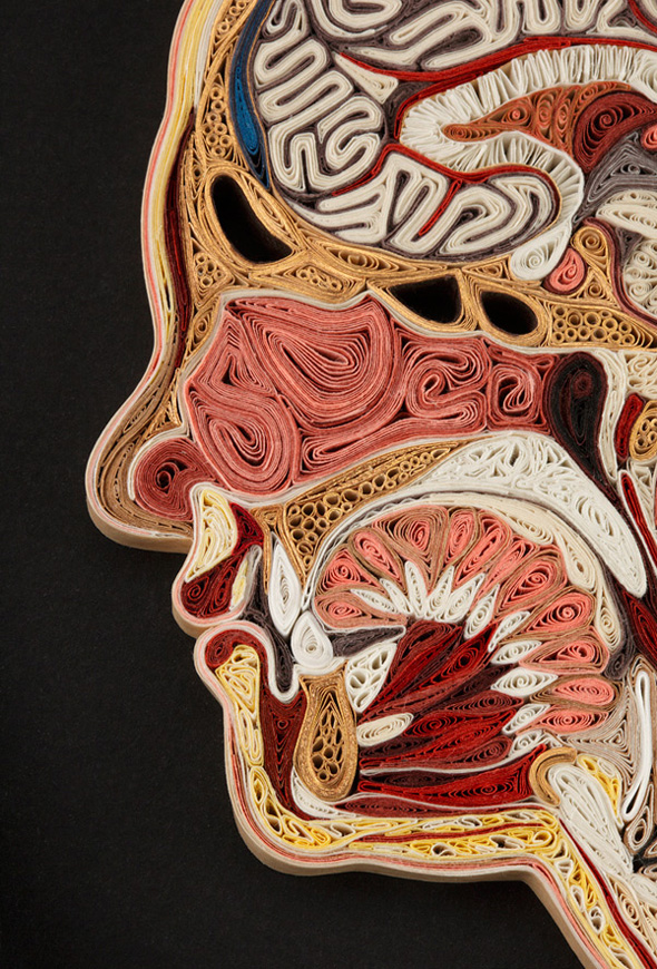 Anatomical Quilling