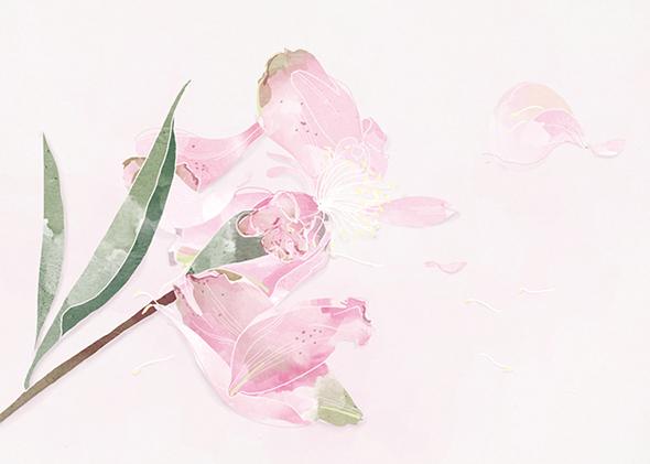 Le illustrazioni di Babeth Lafon