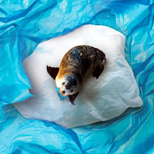 oceani plastica picame wwf foca