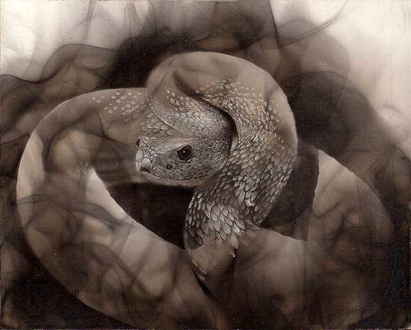 Steven Spazuk, l'artista che dipinge con il fuoco